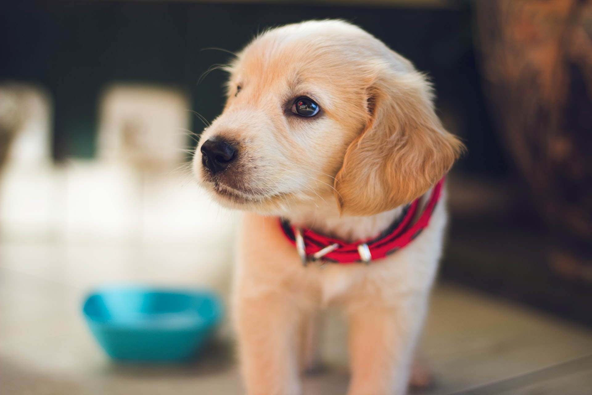 potty training for puppy